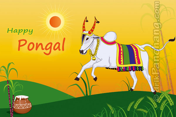 Sankranti greeting cattle worship on mattu pongal m4hsunfo Gallery