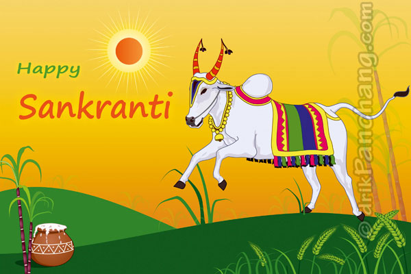 Cattle Worship On Sankranti