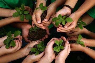 Planting Saplings on Environment Day