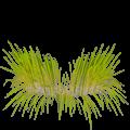 Ghatasthapana Kalash Grass